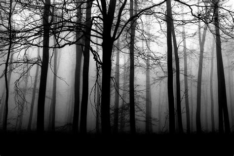 Dark Forest • Interactive RPG Ambience Player